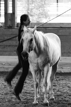 Horses, Animals, Black White Photos, Photoshoot, Pictures, Animaux, Animales, Horse, Animal