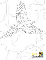 Printable macaw coloring page Free PDF download at http