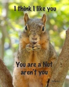 I think I like you Squirrel Pictures, Cute Animal Pictures, Funny Pictures, Cute Squirrel, Baby Squirrel, Squirrels, Animals And Pets, Funny Animals, Cute Animals