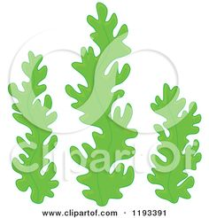 Royalty-Free (RF) Seaweed Clipart, Illustrations, Vector Graphics #1