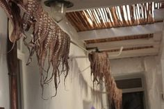 Paros, Greece Octopus drying in a restaurant.