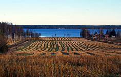 Alajärvi in South Ostrobothnia province of Western Finland. Birches, Seas, Finland, Vineyard, Outdoor, Outdoors, Vineyard Vines, Outdoor Games, Outdoor Living