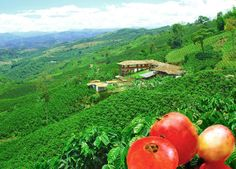A Colombian coffee plantation/ Unesco Word Heritage List