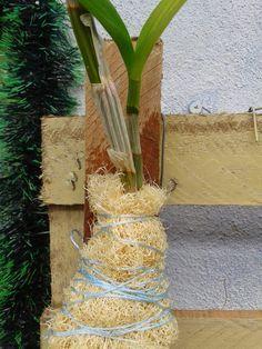 UM SONHO DE CASINHA: ORQUÍDEAS: O USO DA BUCHA VEGETAL NA PLANTAÇÃO DE ORQUÍDEAS! Orchids Garden, Orchid Plants, Air Plants, Driftwood Planters, Growing Orchids, Moss Terrarium, Orchidaceae, Plant Care, Handmade Flowers