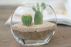 cactus e suculentas primavera garden