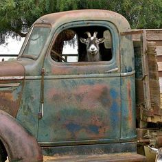 I want the goat and the truck