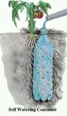 Self watering container