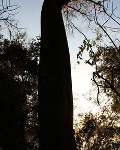 #nature#tree#nofilter#traveler#travel#preservation#liketolike#instapic#instalove#instanature#sky by annacarolsantoss