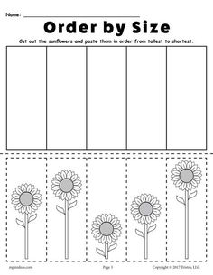 FREE Printable Sunflower Ordering Worksheet - Tallest to Shortest! Practice ordering skills with your preschoolers and kindergartners using this worksheet. Includes a shortest to tallest version too! Get both free here --> https://www.mpmschoolsupplies.com/ideas/7768/free-printable-sunflower-ordering-worksheets-shortest-to-tallest-tallest-to-shortest/