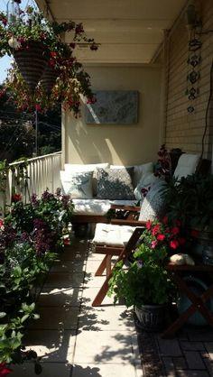 Balcony garden, late summer 2013
