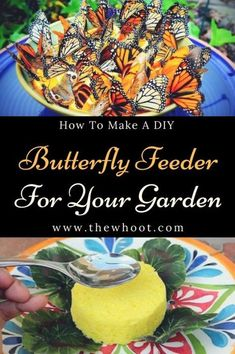 butterfly garden Learn how to make a Butterfly Feeder DIY Project with our video tutorial and Infographic that is very easy to . Weve rounded up some great ideas you wont want to miss. Butterfly Food, Butterfly Garden Plants, Butterfly Feeder, Butterfly House, Monarch Butterfly, Butterfly Project, Garden Crafts, Garden Projects, Diy Projects