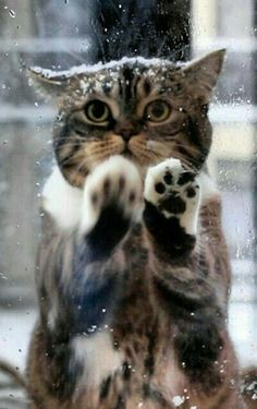 Ok. I get it....when it's snowing i do not have to go to the bathroom.... Love Cats ♥ SLVH ♥♥♥