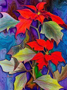 Poinsettias. drawing/digital art by Teresa Ascone
