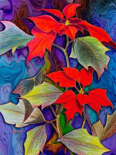 Poinsettias. drawing/digital art by Teresa Ascone