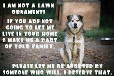 I am not a lawn ornament! If you are not going to let me live in your home and make me part of your family, please let me be adopted by someone who will. I deserve that.