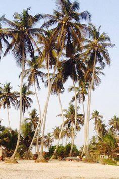 #Ghana#beach#palms#holiday#green#plant#coconut#travel