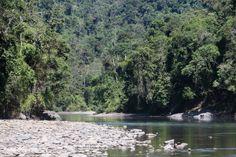 Rio no Parque Nacional de Manu. Foto Por: Rhett A. Butler.Companhia de Gás de perfurar los zona tampão do Parque Nacional de Manu, pondo EM Povos Indígenas OS Perigo Read more at http://news.mongabay.com/2014/0204-hill-gas-manu.html#heGj292ZoRTwGlvz.99