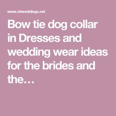 Bow tie dog collar in Dresses and wedding wear ideas for the brides and the…