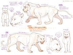 ライオンとトラの違いメモ