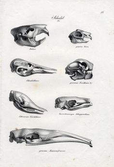 Animal skulls print