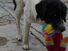 First hunt of my dog - stuffed animal.