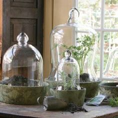 1000 Images About Cloche On Pinterest Bell Jars