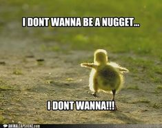 Don't wanna be a nugget
