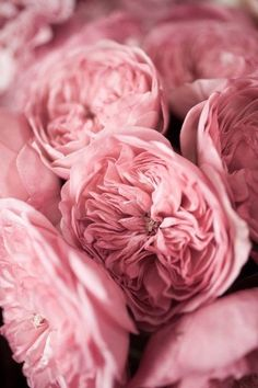 pink, rose and peachy tones Pink Roses, Pink Flowers, Pink Peonies, Fresh Flowers, Pretty In Pink, Beautiful Flowers, Prettiest Flowers, Beautiful Bouquets, Perfect Pink