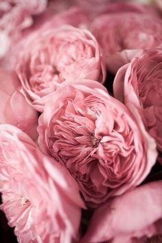 pink, rose and peachy tones