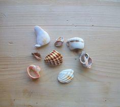 Frammenti di conchiglie materiali per creare 8 di lepropostedimari