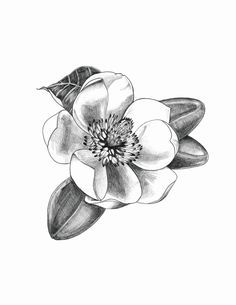 Tattoo idea magnolia