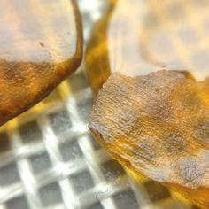Concentrates an an Oil Slick Pad  #oilslick #oilslickstackmicros #oilslickmicros #oilslicksheet #oilslickpad #oilslickstacks #oilslickstyle #oilslickdabs #oilslickcrew #oil #errl #dabs #bho #710 #hash #bubble #bubblehash #concentrates #cannabisconcentrates #silicone #medical #platinum #420 #ganja #cheeba #smoke #kush #mmj #maryjane #cannabis #weed #pot #bud #flower #green #greensquad