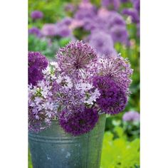 I have just purchased New Allium Collection from Sarah Raven - http://www.sarahraven.com/flowers/bulbs/alliums/new_allium_collection.htm