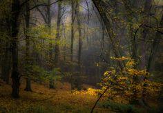 Foggy fall morning (near Prague, Czech Republic) by Marek Boguszak on 500px