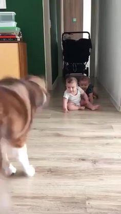 Cute Funny Babies, Cute Funny Animals, Cute Baby Animals, Funny Cute, Funny Dogs, Cute Kids, Funny Baby Memes, Funny Baby Cartoon, Funny Humor