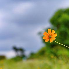 morning blooms! #Yellow #5uryagraphy  .  #Pune #PuneInstagrammers #nature #naturelovers #cloud #cloudporn #Flower #Flowers #green #lonelyplanet #lonelyplanetindia #natgeo #natgeotravel #natgeocreative #lpi #yourshot #morning #goodmorning #puneclickarts #traveltales #travel #Taljai #betterphotography @1x5 @nikonusa @betterphotography @thephotosociety @thepunekar @puneclickarts @natgeo @natgeotravel @natgeocreative @lonelyplanet @lonelyplanetindia @earthpix @maharashtra_ig @narendramodi…