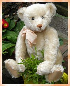 white Steiff 1905 (thought this was my reproduction artist teddy bear with the exact same face, same mohair and same ribbon ~ very confusing)