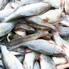Fish Collagen: The Anti-Aging Protein with the Best Bioavailability