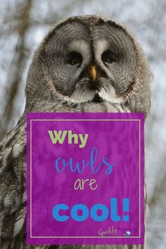 Why owls are cool  w