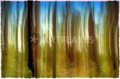"""""""the obscure forest"""" von Bernd Hoyen #fotografie #photography #fotokunst #photoart #digitalart #kunst #art #baum #bäume #tree #trees #abstrakt #abstract #blau #blue #braun #brown #verwischung #verwischt #blurred #unscharf #blurring #verschwommen #blurry #natur #nature #deutschland #germany #pfälzerwald #palatinateforest"""