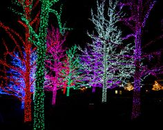 Christmas lights in Oklahoma City I just saw these last week end they are so beautiful. I want to do my trees at the house like this. Just super.