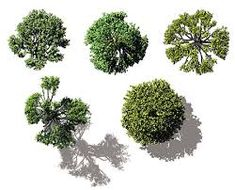 tree plan - Cerca con Google