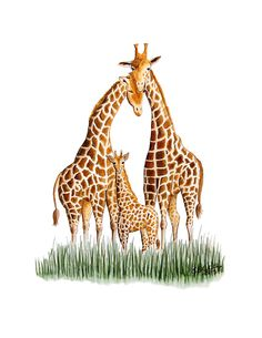 Giraffe Art Print as Safari Theme Nursery Decor by TinyToesDesign, $24.00