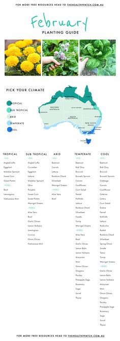 Edible Planting Guide Australia Wide