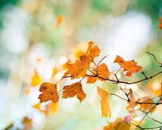autumn photography leaves 8x10 20x30 fall by mylittlepixels