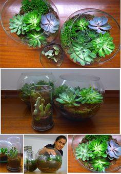 Jardim de suculentas no vidro