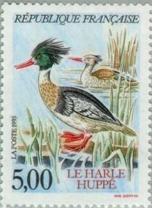 Red-breasted Merganser (Mergus serrator)