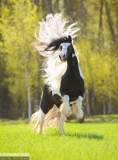 Look at this gorgeous horse with it's hair flowing everywhere. ***** Referenced by 1 Dollar Web Hosting (WHW1.com): WebSite Hosting - Affordable, Reliable, Fast, Easy, Advanced, and Complete.©