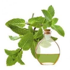 How to Make Peppermint Essential Oil at Home. Peppermint oil is the most effective essential oil in aromatherapy both for the treatment of respiratory diseases and to promote physical and mental well-being. It has medicinal properties which are v. Home Remedies, Natural Remedies, Esential Oils, Buy Essential Oils, How To Make Oil, Health Shop, Diy Spa, Natural Cosmetics, Dark Circles