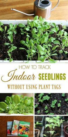 This seedling tracking system keeps track of all of your indoor seed sowing without the need for tags or markers for each plant.#gardening#gardenideas#indoorgardening#seedstarting#planttags#empressofdirt